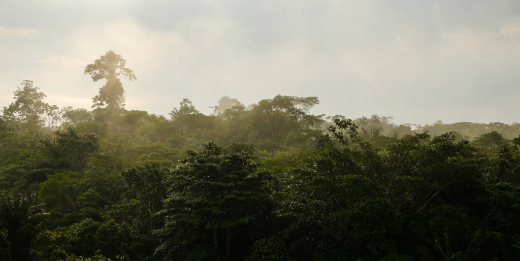 Selva amazónica, Caquetá Colombia - Utopías project